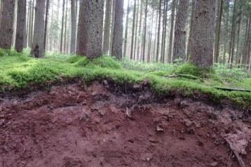 soil_trees.JPG