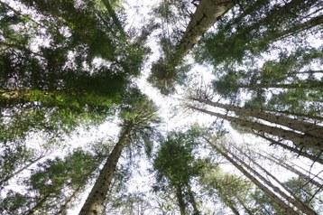 tree_up.JPG